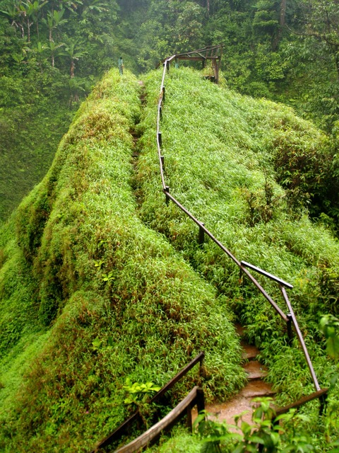 Thailand jungle myanmar.