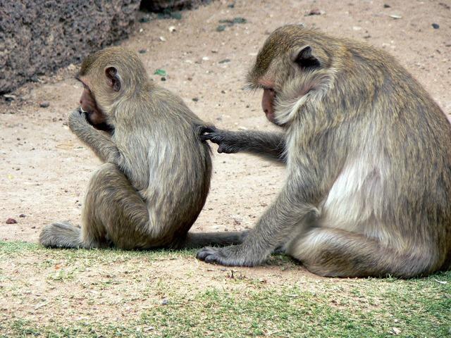 Thailand monkeys lampang.