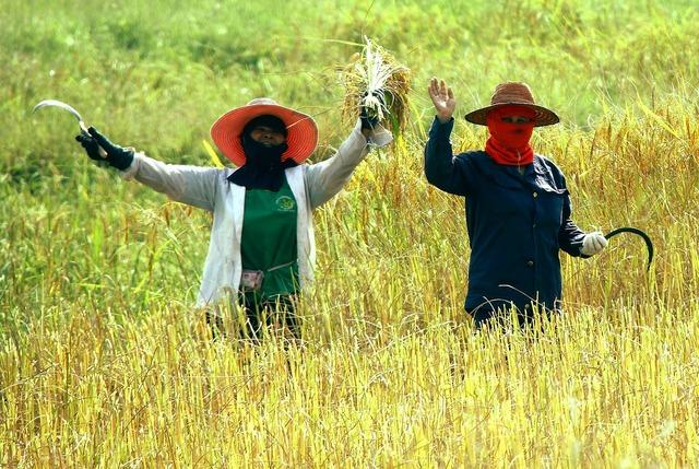 Thailand women field, people.
