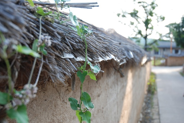 Thatch roofed hose old school thatched roof.