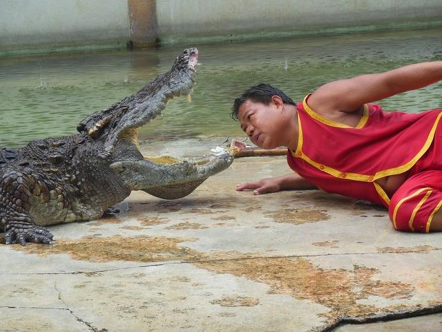 The crocodile farm crocodile farm samut prakan.