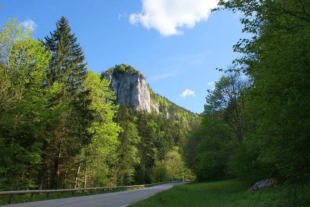 The road trees landscape, nature landscapes.