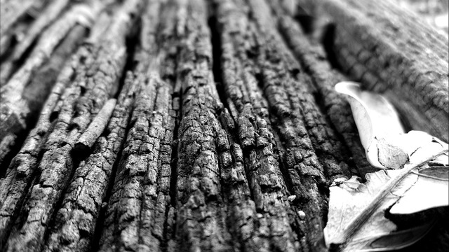 The trunk bark wooden.