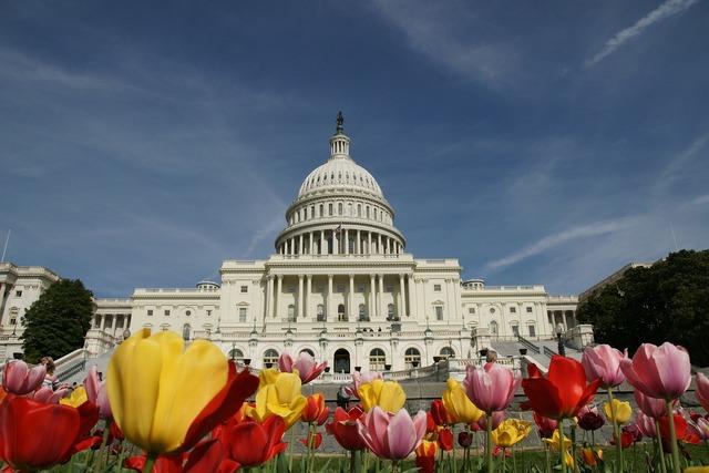 The white house washington tulips.