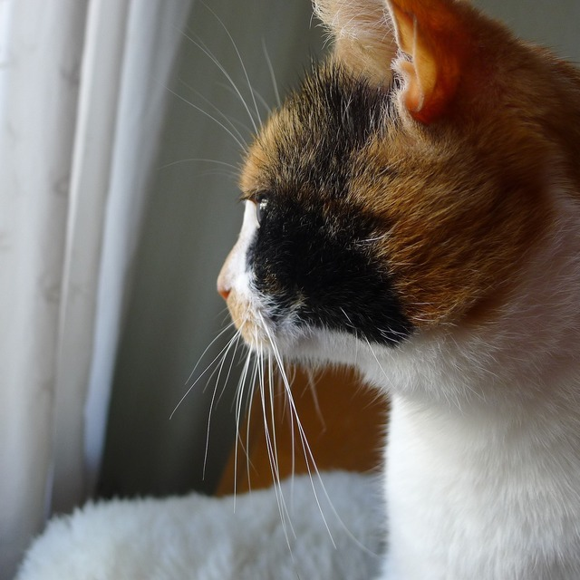 Thoughtful cat whiskers, animals.