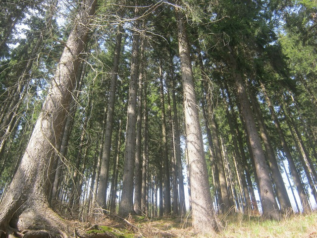 Thuringian forest forest thuringia germany, nature landscapes.