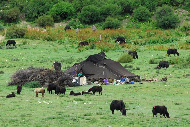 Tibet nomads nature, nature landscapes.