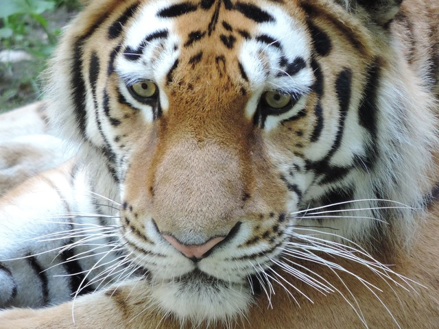 Tiger cat zoo, animals.