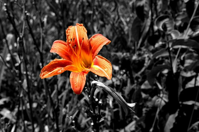Tiger lily color orange.