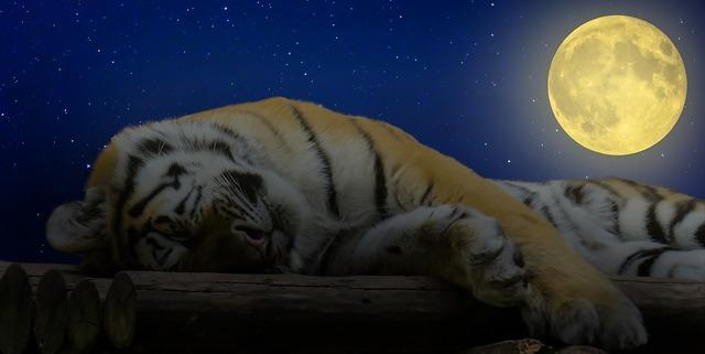 Tiger sleep good night, animals.