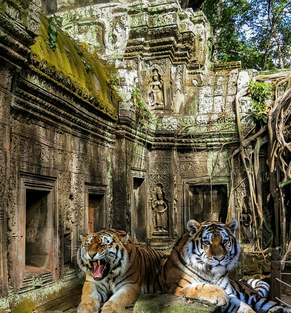Tiger temple jungle, religion.