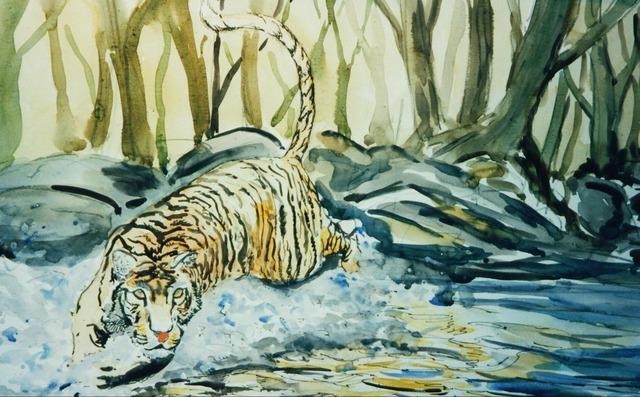 Tigers cat mammal, animals.