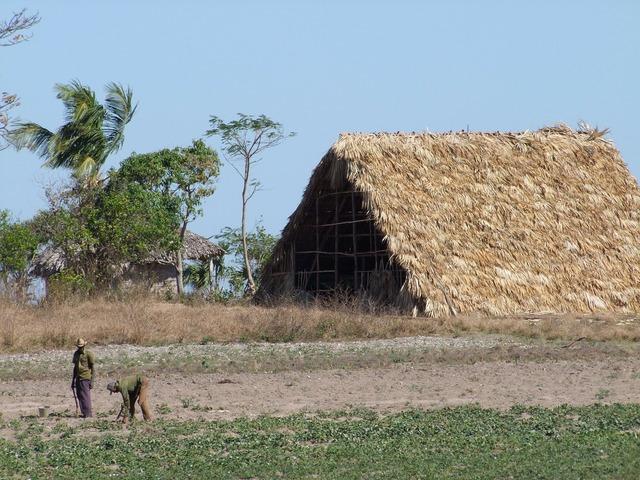 Tobacco farm farmer.
