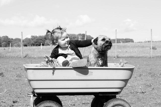 Toddler dog black and white, animals.