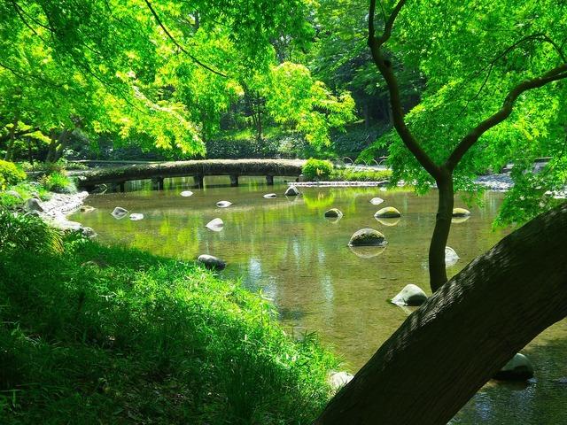 Tokyo japanese garden.