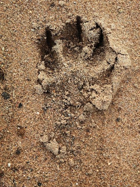 Track dog paw paw print.