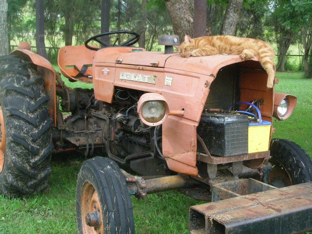 Tractor farm rural, animals.
