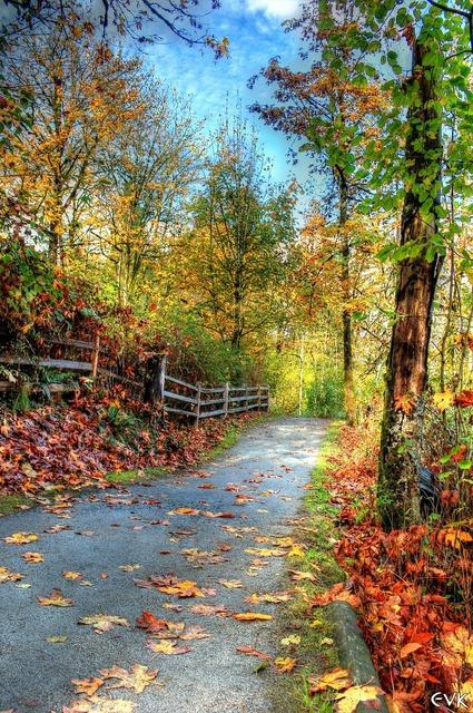 Trail nature landscape, nature landscapes.