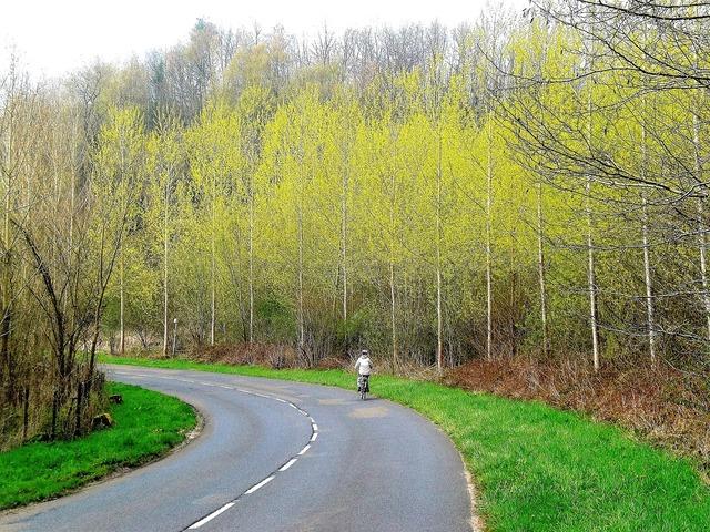Transport bicycle trees, transportation traffic.