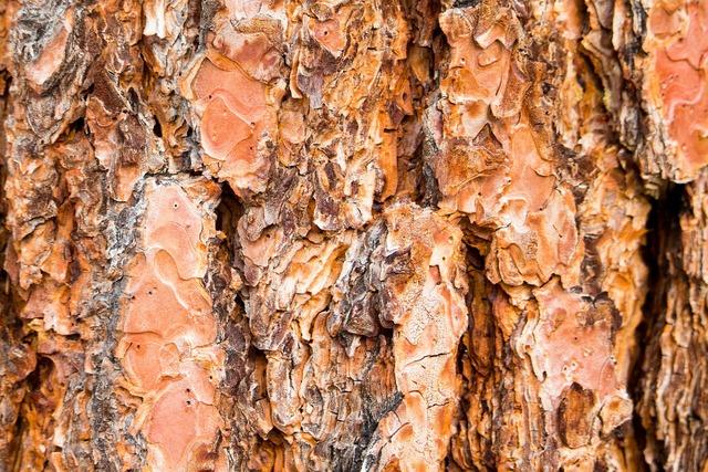Tree bark trunk texture, backgrounds textures.