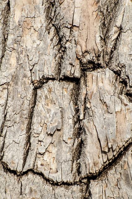 Tree bark wood cracked, nature landscapes.