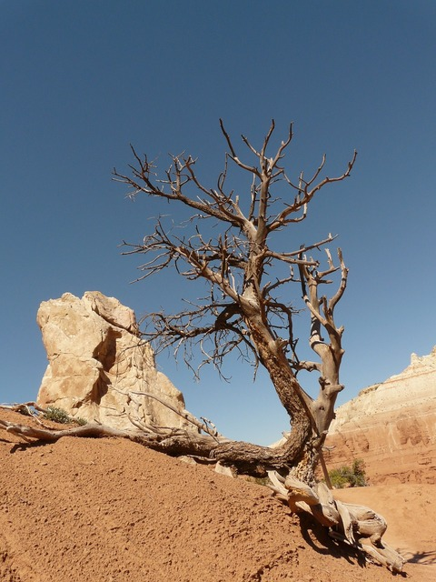 Tree dry drought, nature landscapes.