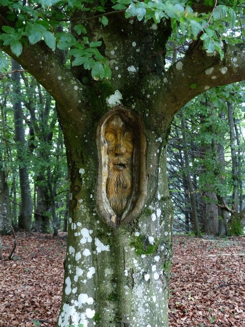 Tree face forest spirit carving.