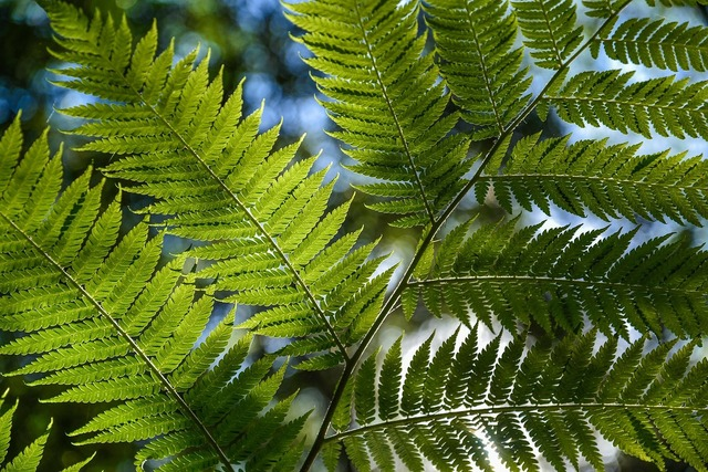 Tree fern rainforest foliage.