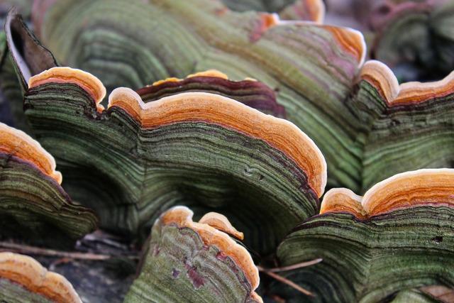 Tree fungus mushroom baumschwamm.