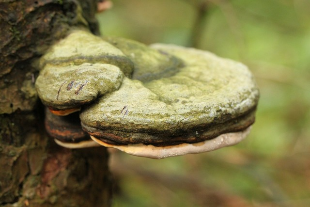 Tree fungus mushroom forest, nature landscapes.
