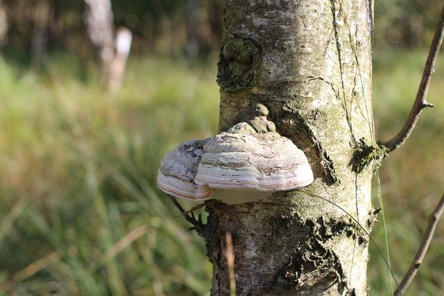 Tree fungus mushroom tree, nature landscapes.