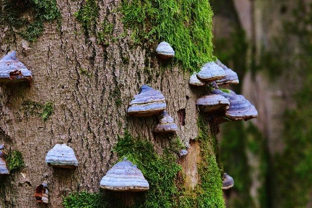 Tree fungus tree mushroom, nature landscapes.