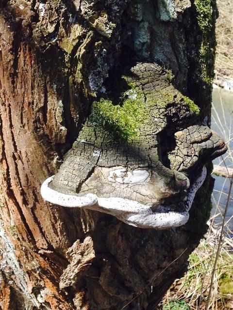 Tree fungus tree old.