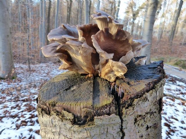 Tree fungus tree stump mushroom, nature landscapes.