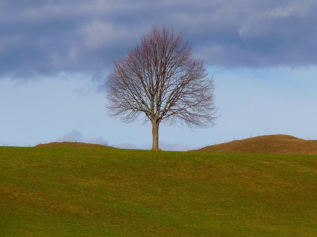 Tree individually nature, nature landscapes.