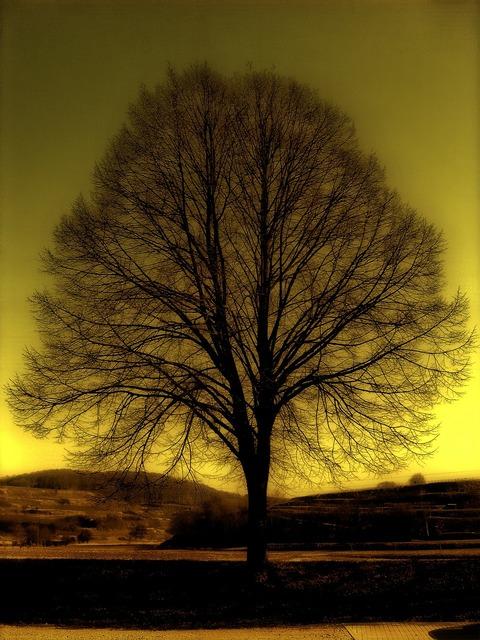 Tree kahl winter, nature landscapes.