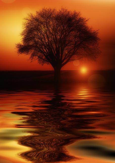 Tree mirroring water, travel vacation.