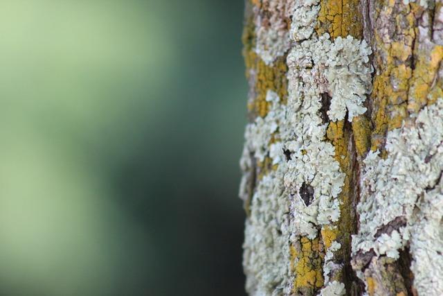 Tree nature wood, nature landscapes.