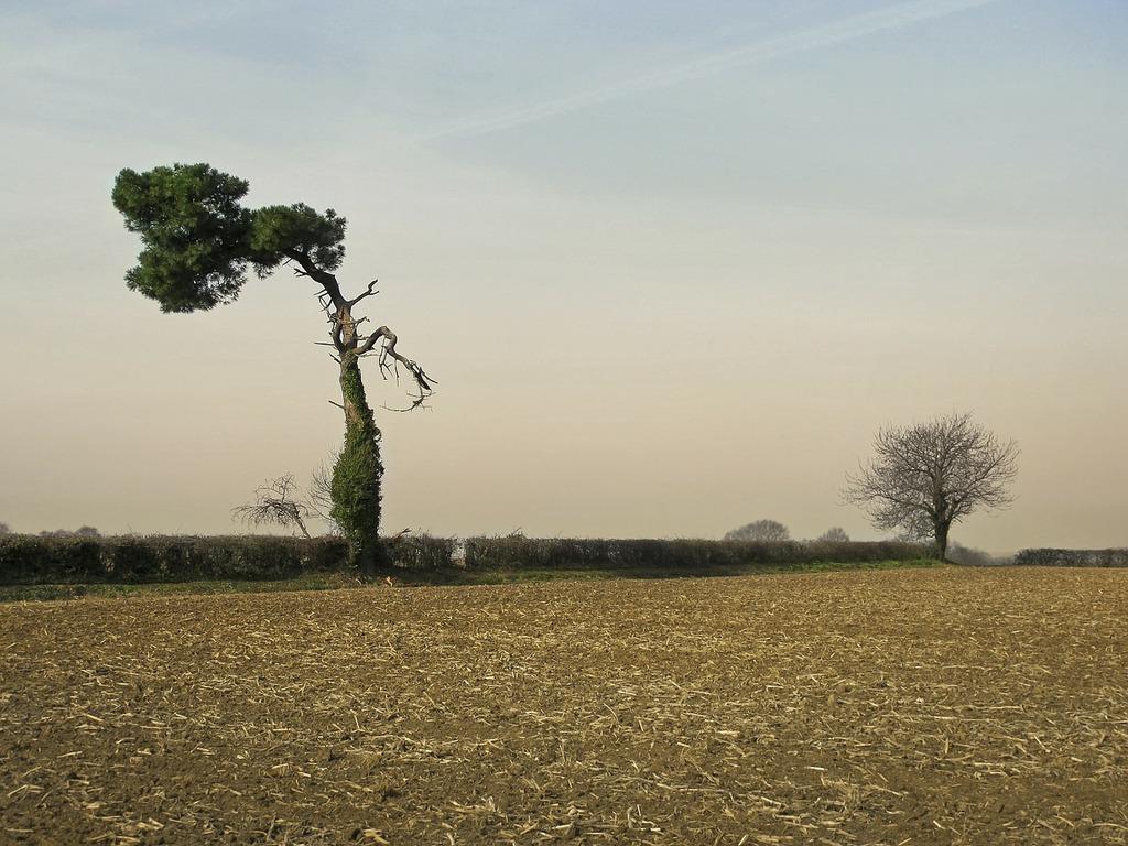 Tree pine solitaire.