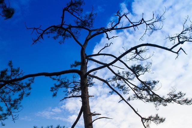 Tree sky nature, nature landscapes.