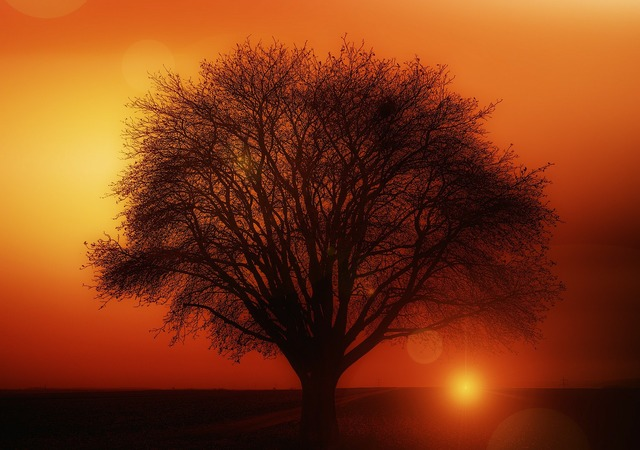 Tree solitary sunset, travel vacation.