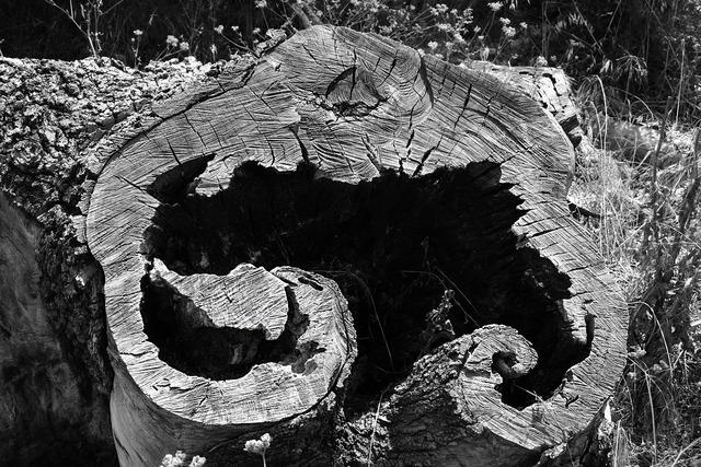 Tree stump cut, nature landscapes.