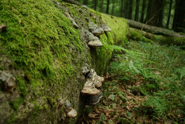 Tree tree fungus green, nature landscapes.