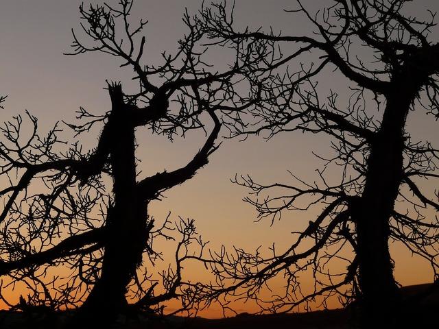 Tree trees dark.
