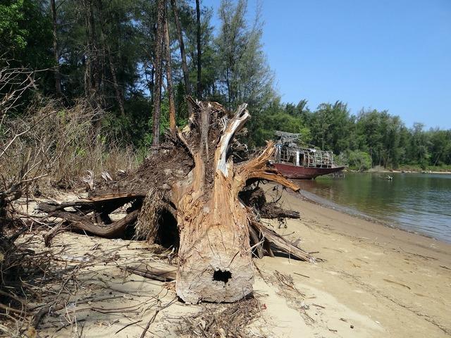 Tree trunk fallen estuary, nature landscapes.