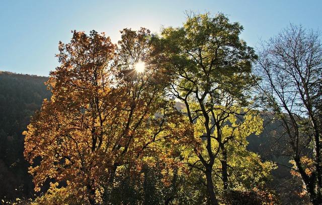 Trees autumn mood, nature landscapes.