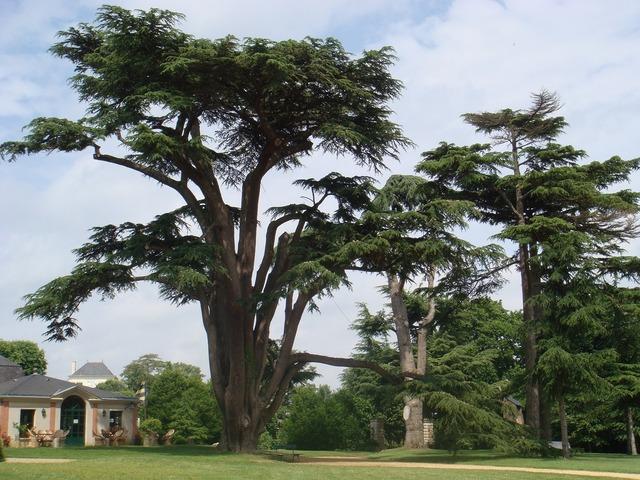 Trees castle france.