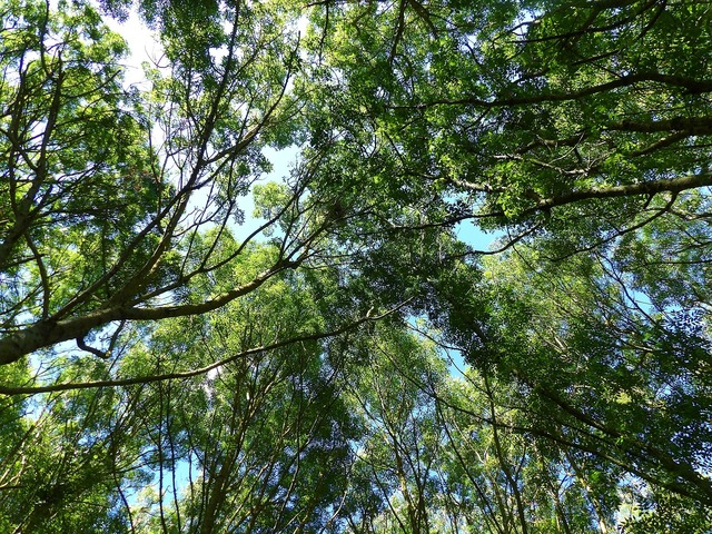 Trees diving against nature, nature landscapes.