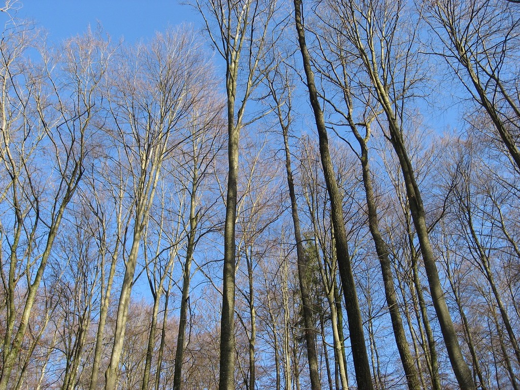 Trees forest sky, nature landscapes.