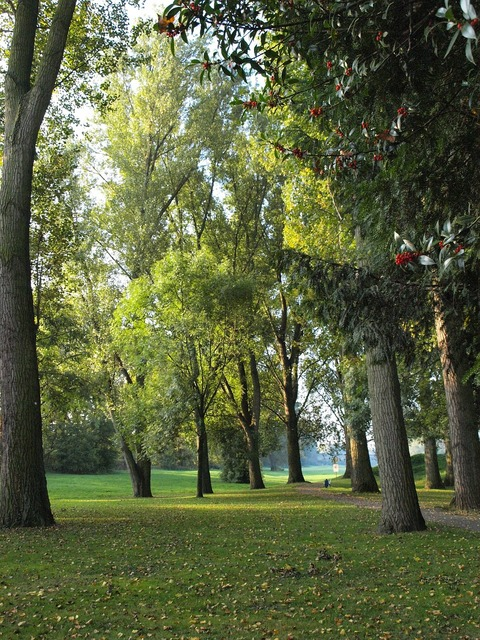 Trees main banks main meadows.